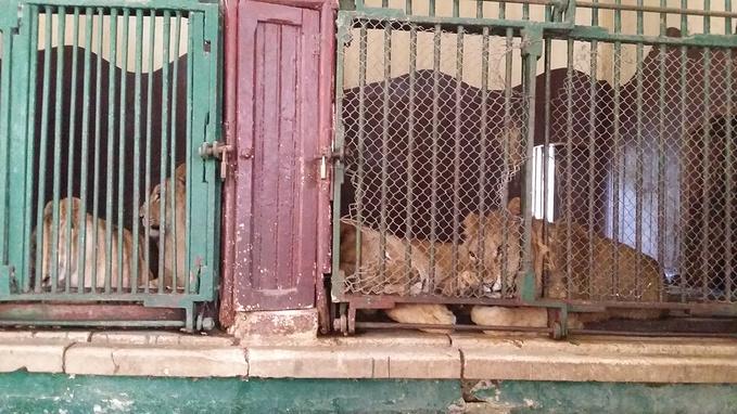 开罗动物园图片
