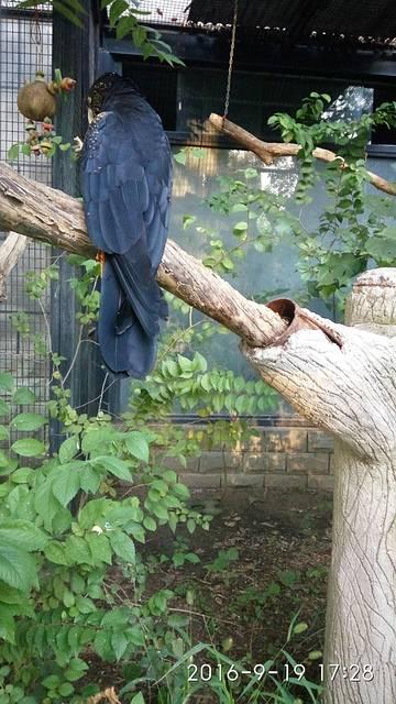 北京动物园半天.