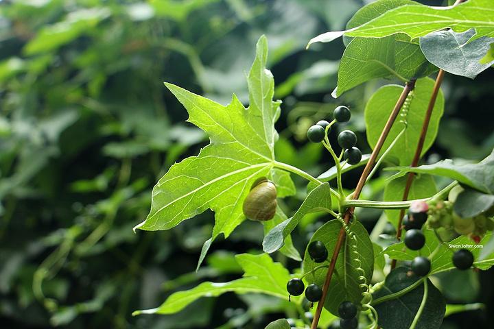 背景 壁纸 绿色 绿叶 树叶 植物 桌面 720_480