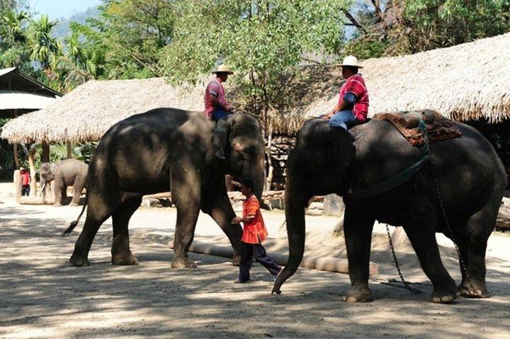 """""""可爱的导游,很温暖的华人导游_泰国清迈美旺大象营""""的评论图片"""