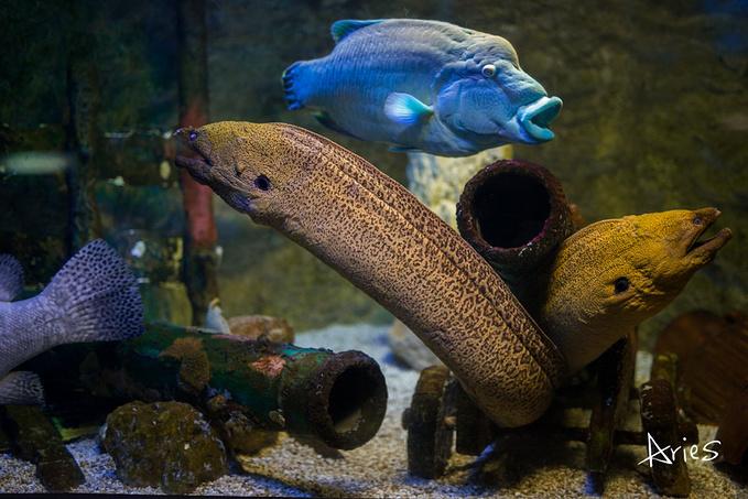 壁纸 动物 海底 海底世界 海洋馆 水族馆 鱼 鱼类 679_453