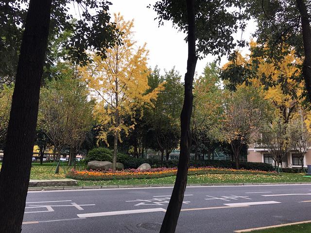 """这个季节,成都的街头非常漂亮!从""""陈麻婆""""出来,我们步行前往人民公园"""