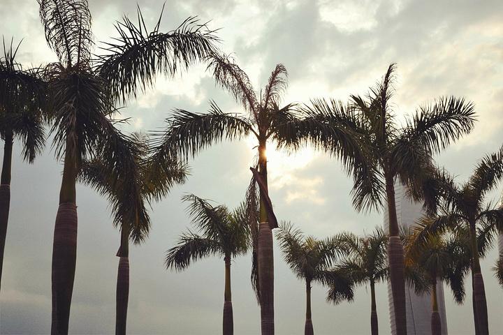 阳光,沙滩,海浪,椰子树. .