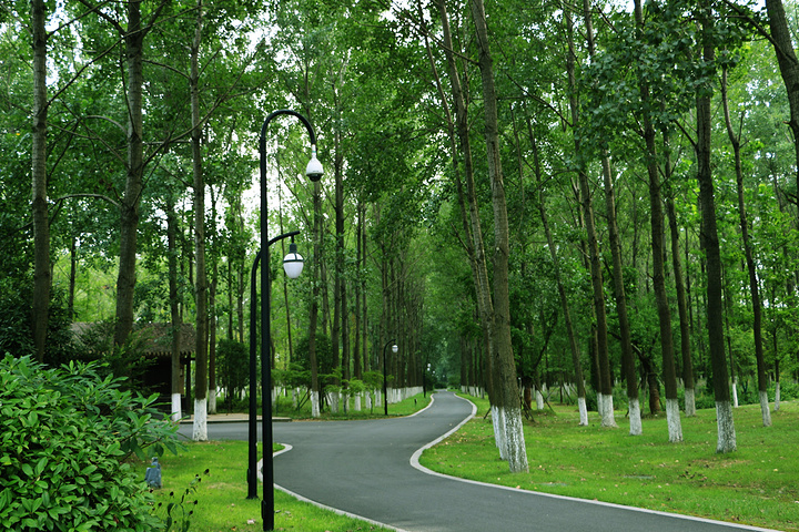 古淮河生態公園,面積還挺大的,空氣比較清新,散步其中也是不錯的選擇圖片