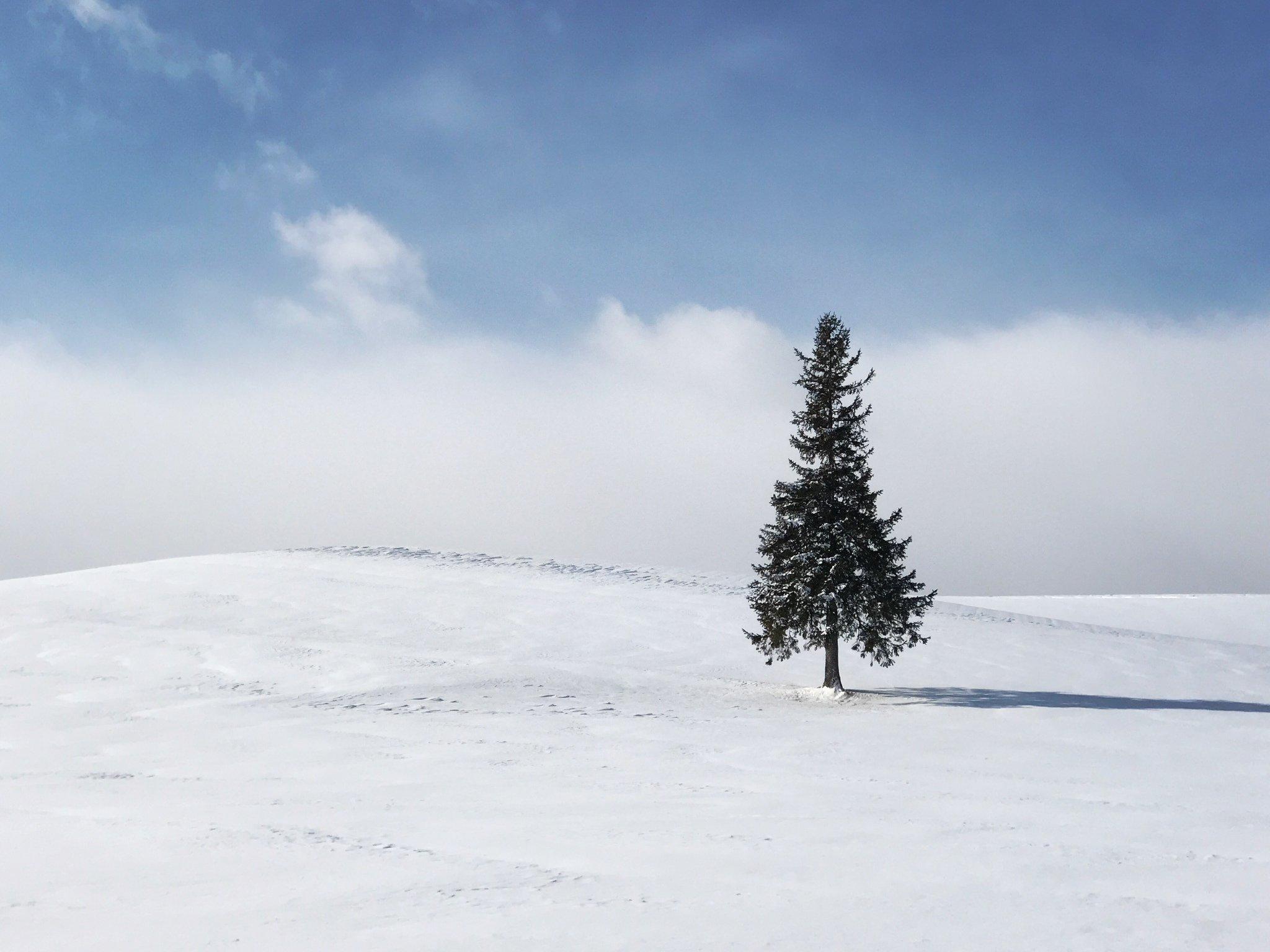 雪の北海道  北国冬日的一封情书
