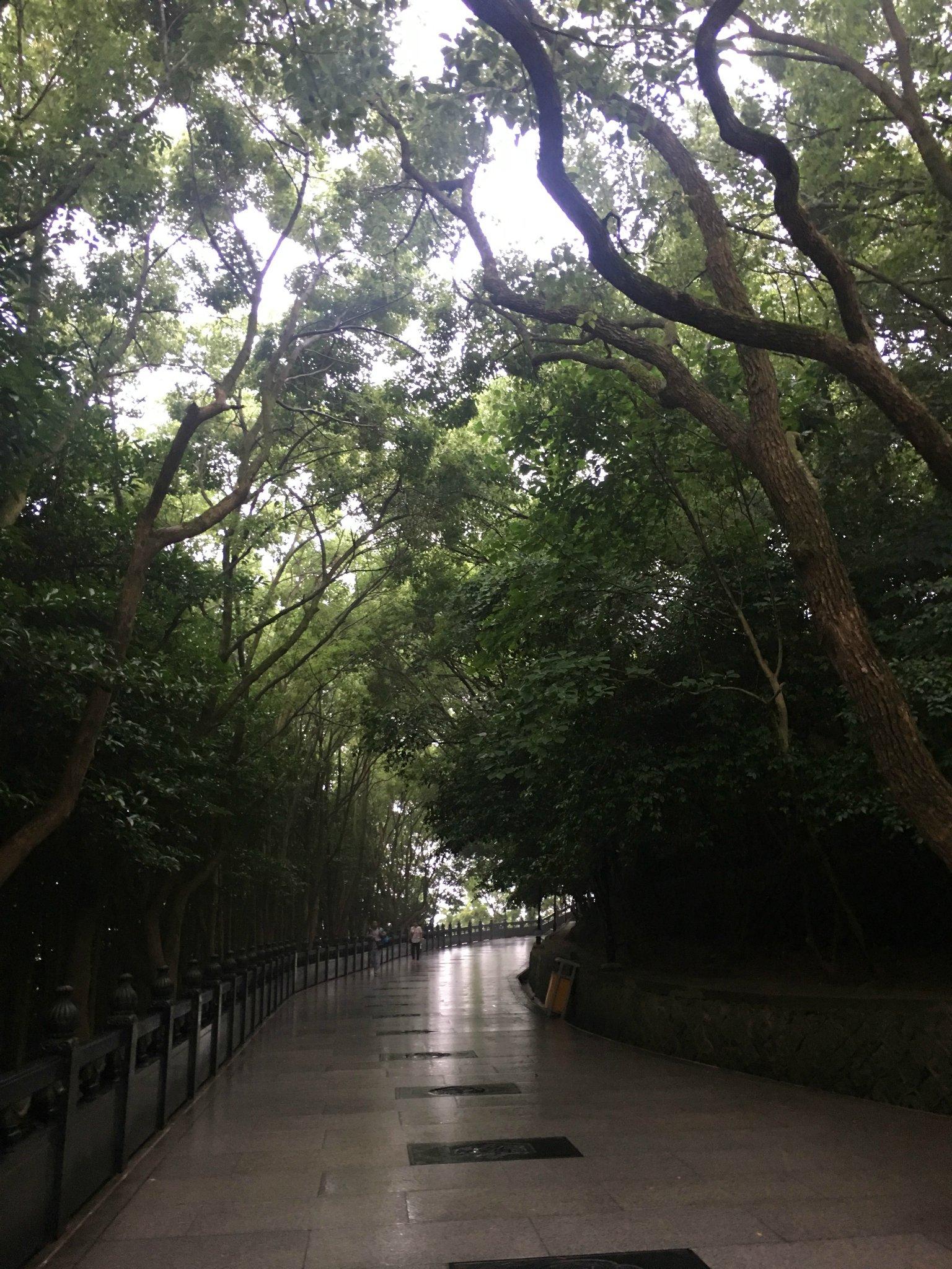 201833米高南海攻略游玩观音,南海攻略大佛应南京动物园观音图片
