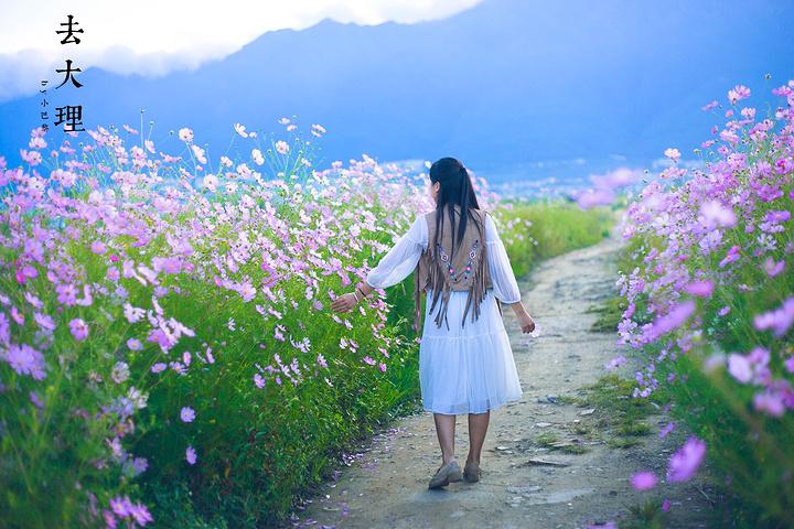 阳光下的格桑花海,是路边最美的风景.3.