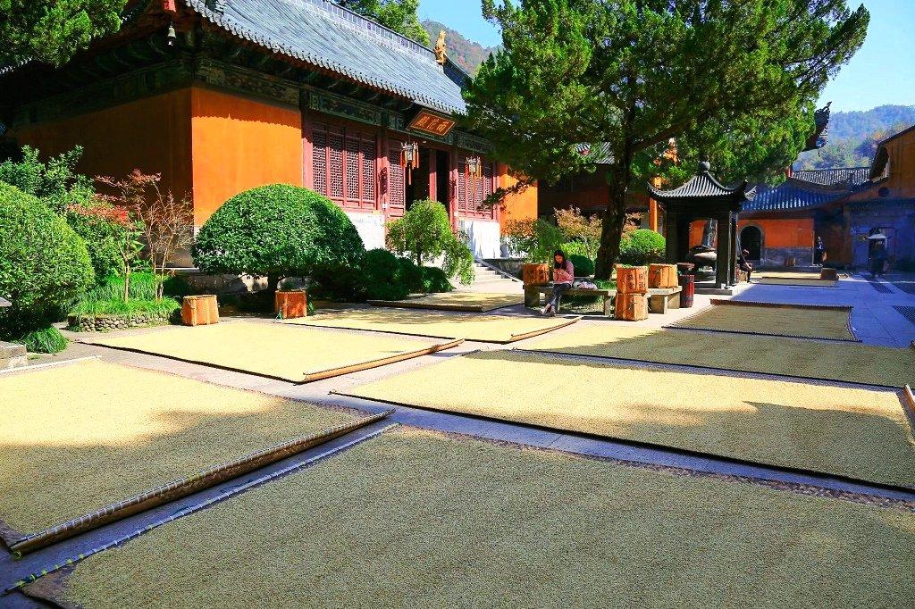 木森天梵音缭绕到寺庙游览礼佛的人络绎不绝,据称国清寺现有和尚100余