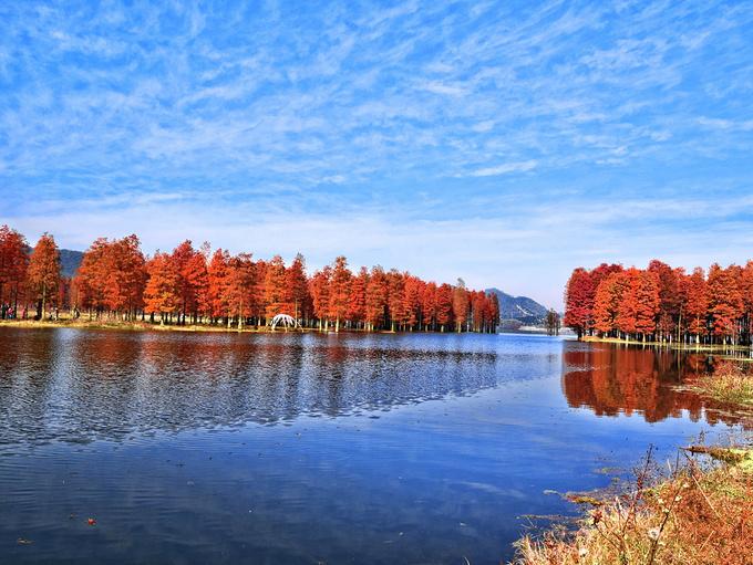 四明湖水杉在初冬遇见江南的喀纳斯_宁波旅游攻略_游