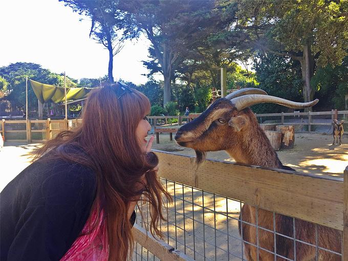 旧金山动物园图片