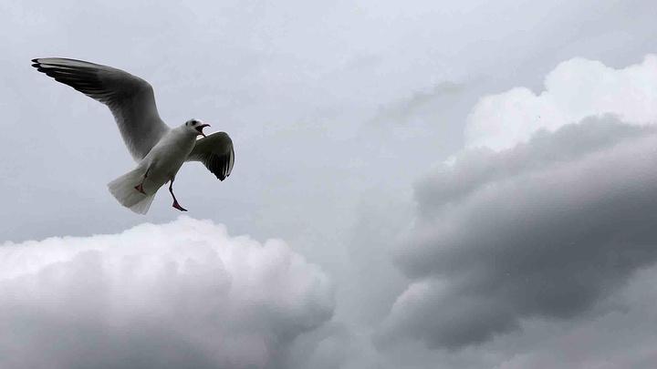 海鸥动物头饰手工制作