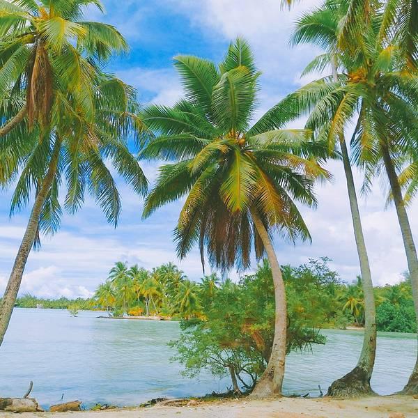 2019波拉波拉岛稻田,波拉波拉岛波拉波拉岛游川西门票自驾游攻略图片