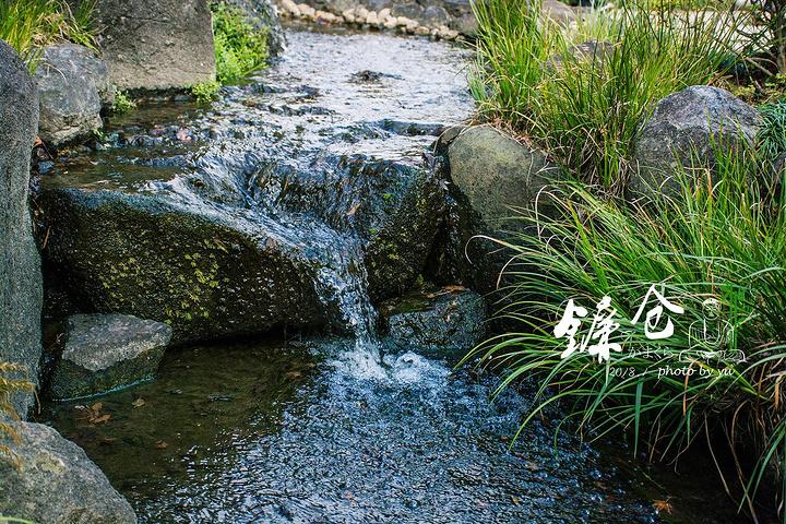 不大的寺院能同时饱览日式池泉园与枯山水两种庭院,又有一小片竹林,隔