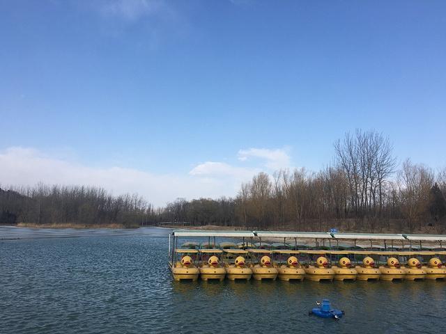 最后一站奥林匹克森林公园感受了冬季的蓝天白云清水湖面.图片