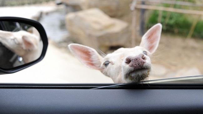 开车看动物图片