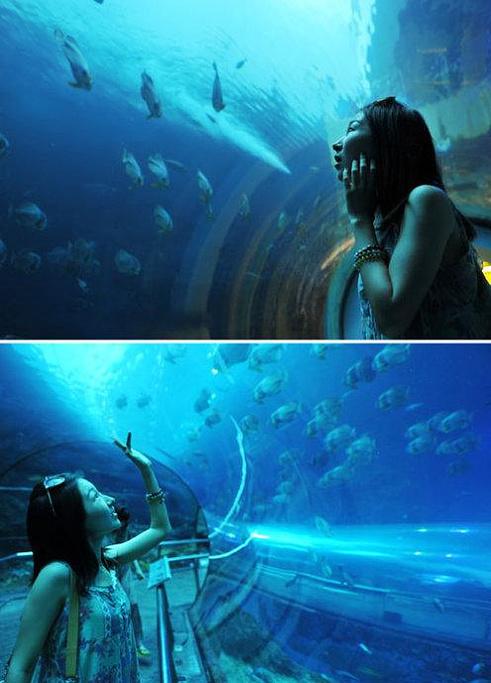 壁纸 海底 海底世界 海洋馆 水族馆 桌面 491_683 竖版 竖屏 手机