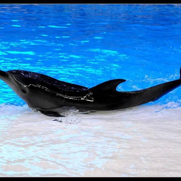 这里是全球最大的海洋主题乐园,其内容囊括顶级机动游戏,珍稀动物展馆