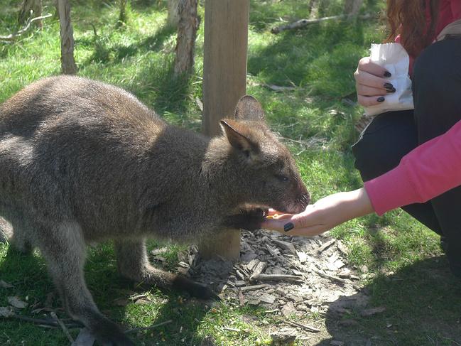 澳大利亚-大洋洲最大的野生动物园