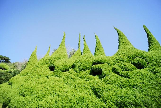 一上岛这个植物墙给我逗坏了,好可爱