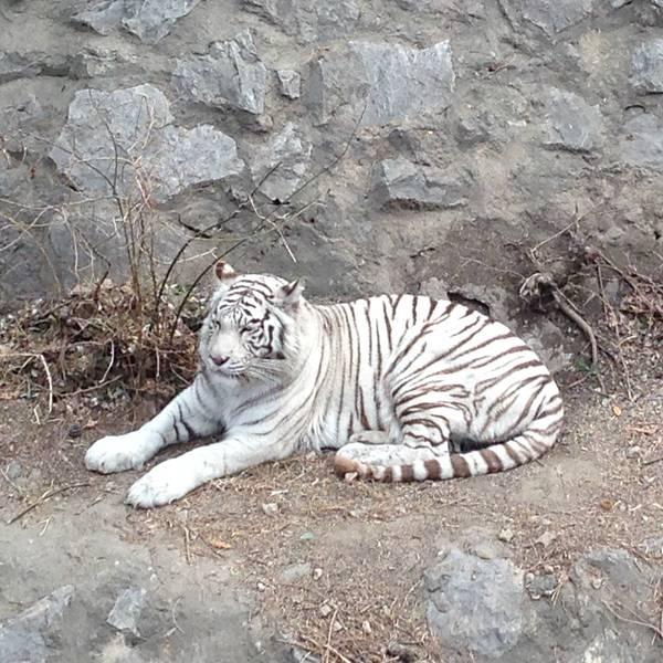北京动物园旅游攻略