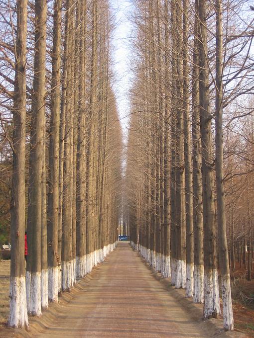 风景图片一条路两边树