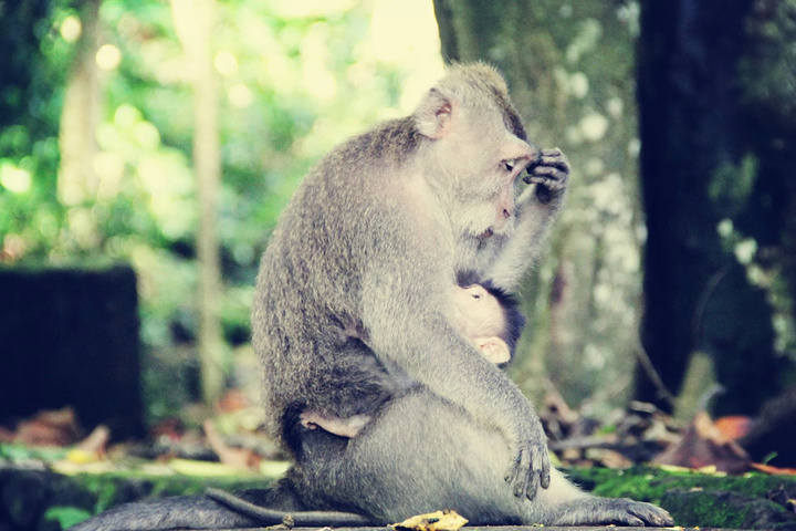 母猴子小猴子最有爱了