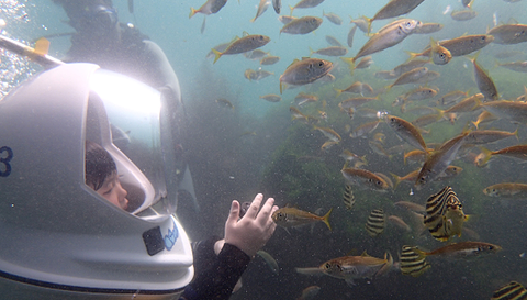 壁纸 动物 海底 海底世界 海洋馆 水族馆 鱼 鱼类 480_273