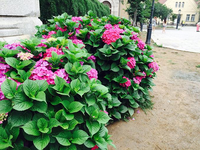 红瓦绿树的城市  再送上几张美丽青岛的图片~纯手机拍摄无ps