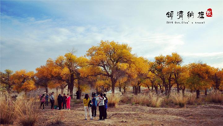 不多说 额济纳胡杨林自然保护区评论 去哪儿攻略社区