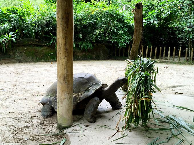 陆地上最大的爬行ag游戏直营网|平台:象龟,不过看它吃东西瞌睡真的就止不住的来.