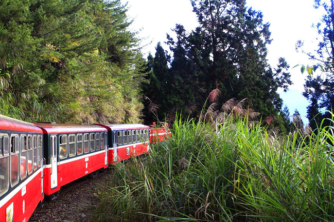 阿里山森林小火车图片