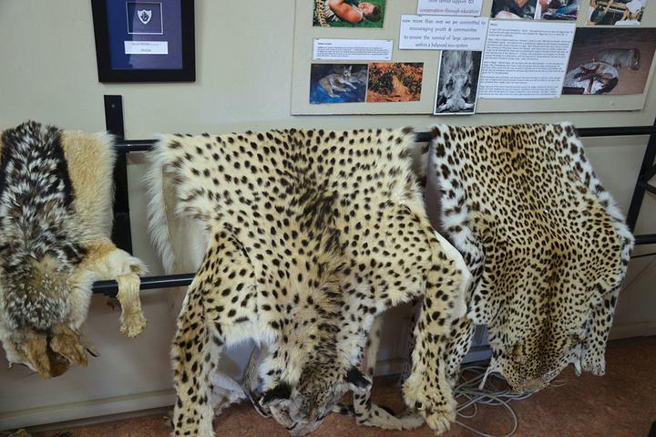 各种不同的猫科动物的脚印形状.
