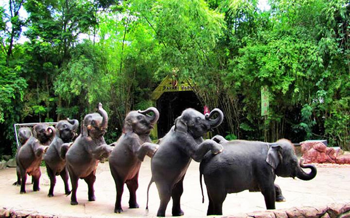 动物园的动物种类非常多,最好的是可以比较近距离的观看它们.