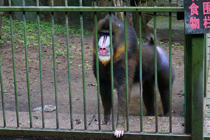 青岛动物园图片