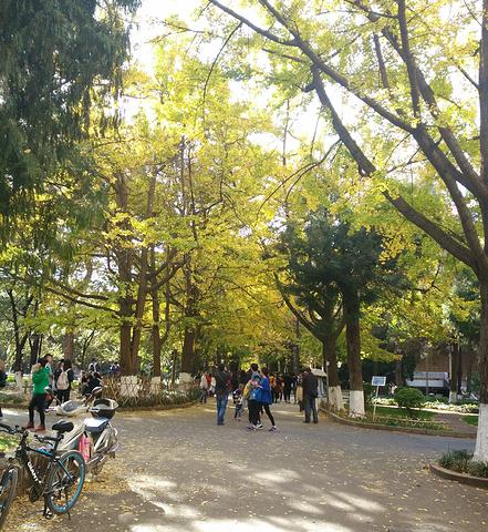 云南大学是一所具有欧式风格的东方校园