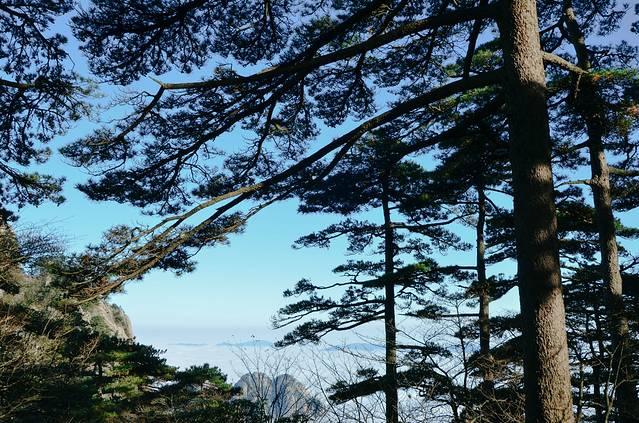 蓝色水墨松树素材