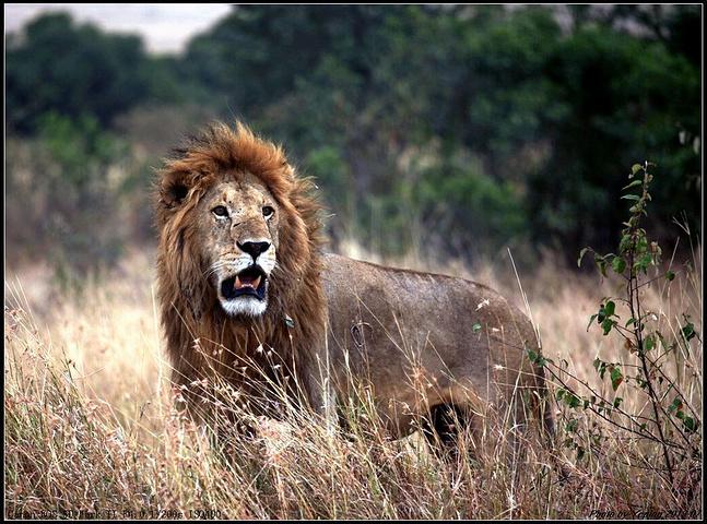 2016是世界上最好的野生动物保护区之一