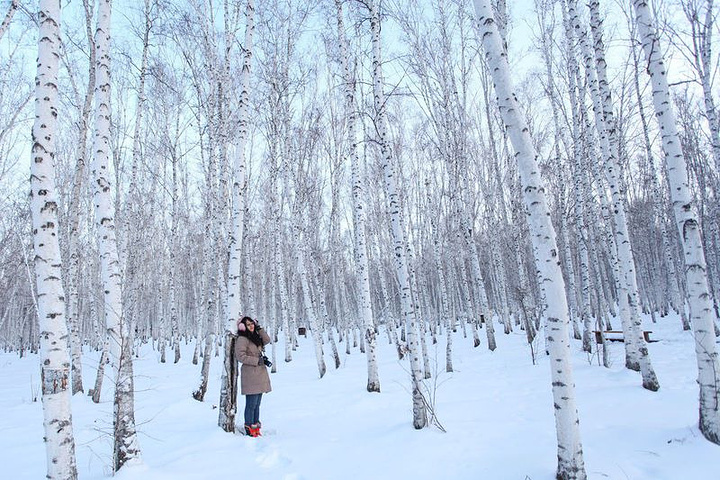 于是,一首优美动人的俄罗斯歌曲《白桦林》应运.