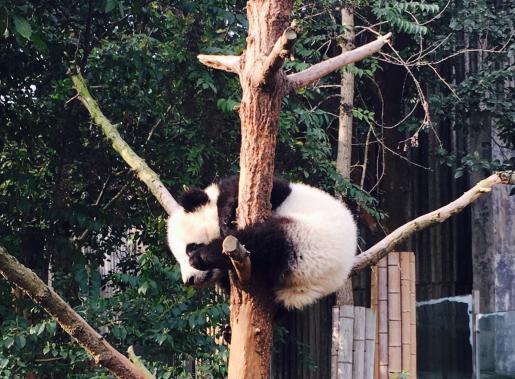 看完可爱的熊猫们,我们乘坐大巴回到成都市区觅食