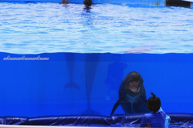 壁纸 动物 海洋动物 鲸鱼 桌面 650_433