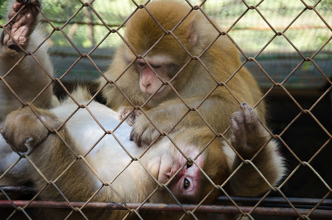 动物园-并不是动物的乐园  如果不知道怎么坐车,就打开手机地图.