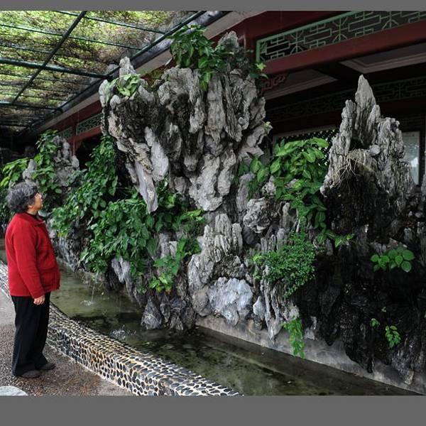 民间榆树盆景图片
