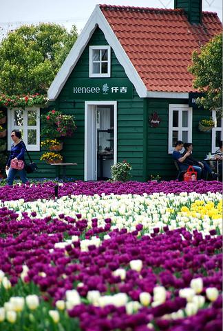 风车,郁金香,小木屋,你要的荷兰元素,这.