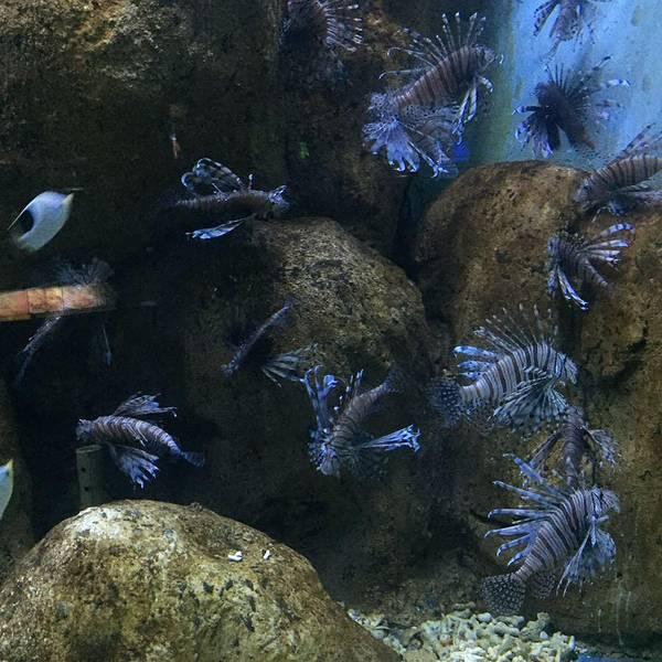 光碟手工制作海底动物