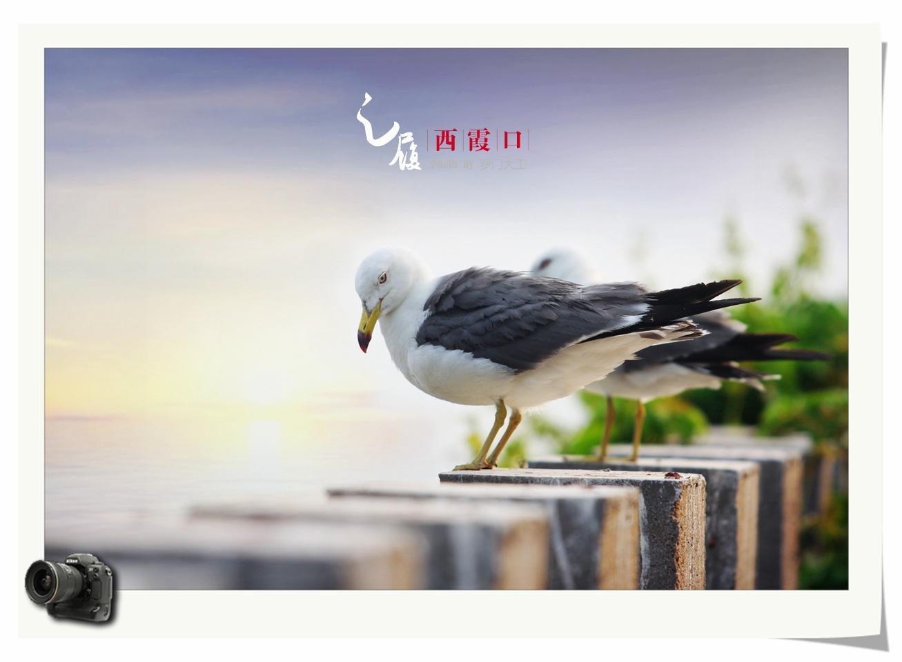 海驴岛:海上仙山,鸥鹭王国