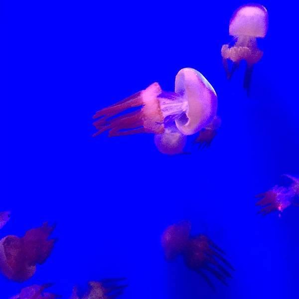 光碟海洋动物手工制作