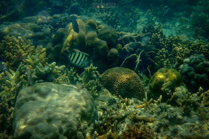 壁纸 海底 海底世界 海洋馆 水族馆 720_480