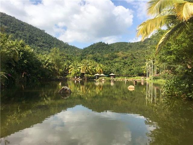 三亚比较有名的热带雨林还有亚龙湾森林公园,个人认为这种差不多的图片