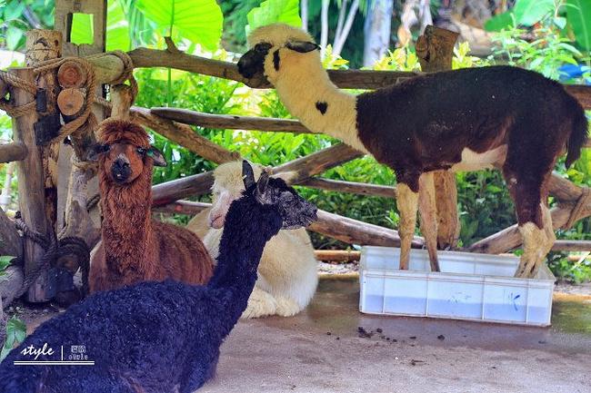 冰雪世界位于三亚宋城旅游区内,毗邻三亚千古情景区,三亚宋城彩色动物