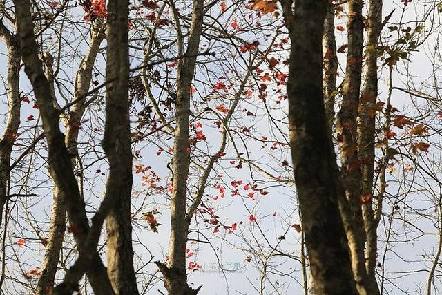 壁纸 树 桦林 桦树 640_427